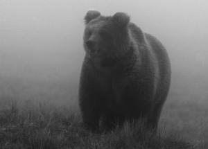 Wandern ist Bärensache