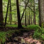 Buchenschutzgebiet im Steigerwald - Naturwälder