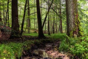 Buchenschutzgebiet im Steigerwald