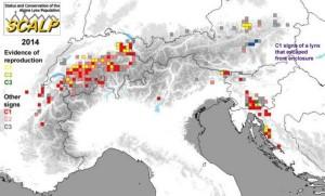 Luchs im Alpenraum