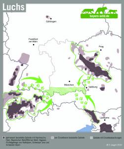 Luchs Vorkommen in Bayern - Luchs im bayerischen Alpenraum