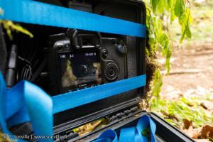 Bärenland - Selbstauslösende Fotofallen gehören zur Ausrüstung des Teams. Damit können professionelle Fotos von Bären in freier Wildbahn aufgenommen werden. (Foto: S, Sonvilla)