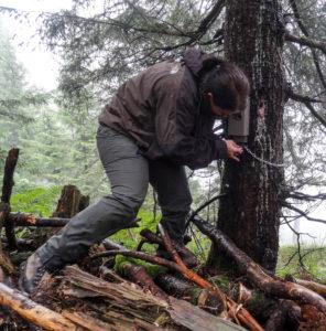 Befestigung einer Wildtierkamera an ausgewähltem Standort. (Foto: K. Weingarth) - Fotofallenmonitoring Luchs