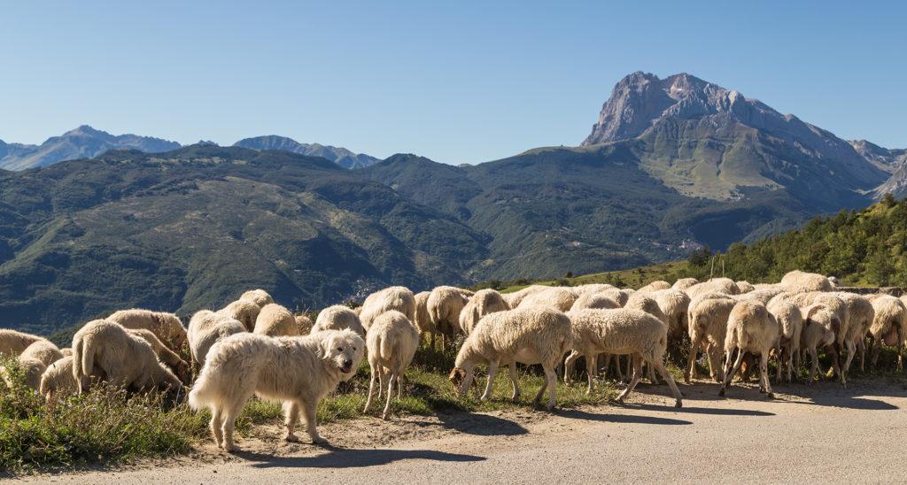 Aktionsplan Wolf: Wo bleibt der Herdenschutz?