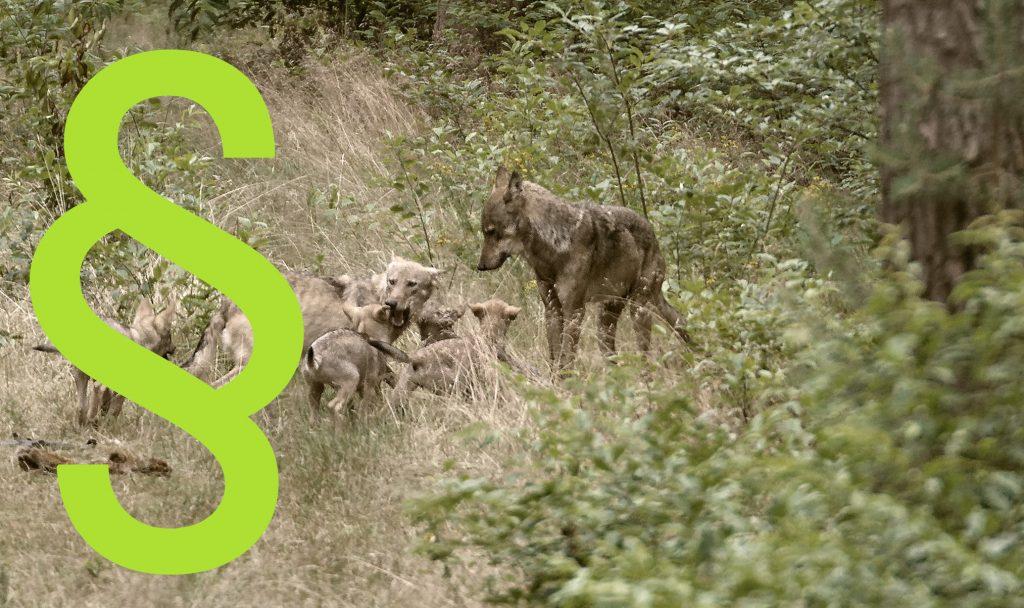 Umgang mit dem Wolf - Wolf Bundesnaturschutzgesetz