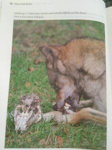 Wolf Ausschnitt