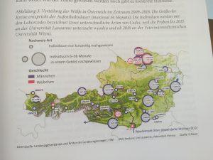 Der Wolf in Österreich