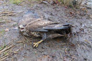 Naturschutzkriminalität